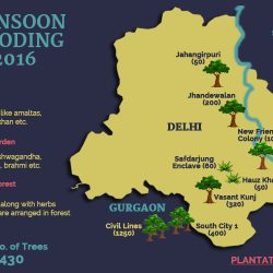 Monsoon Wooding Plantations 2016